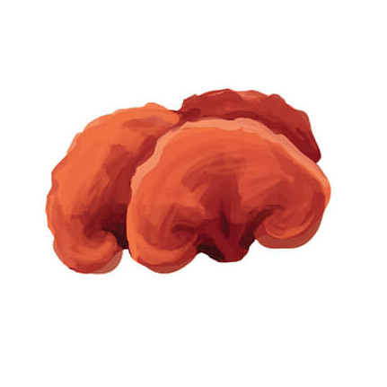 ReishiMushrooms.jpg#asset:120580